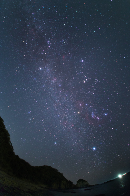 冬の満天星B.jpg