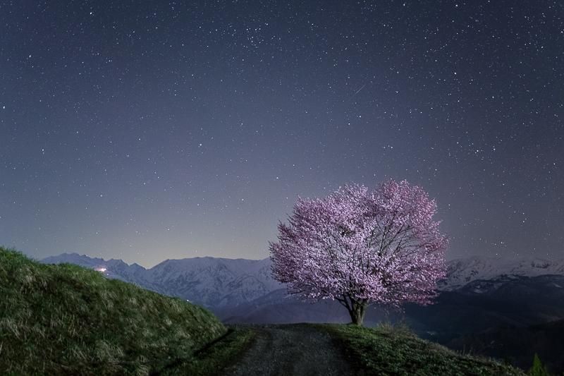 北アルプスと桜の星景写真2B.jpg
