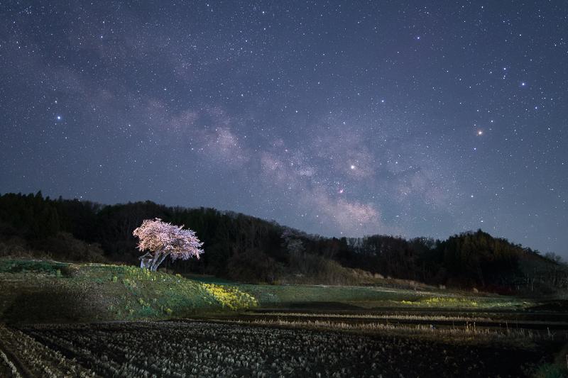 桜星景~小沢の桜B.jpg