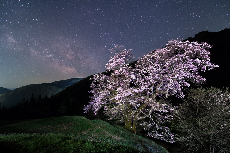 桜星景~駒つなぎの桜B2.jpg