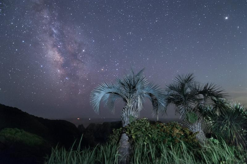 棕梠の木と星空2B.jpg