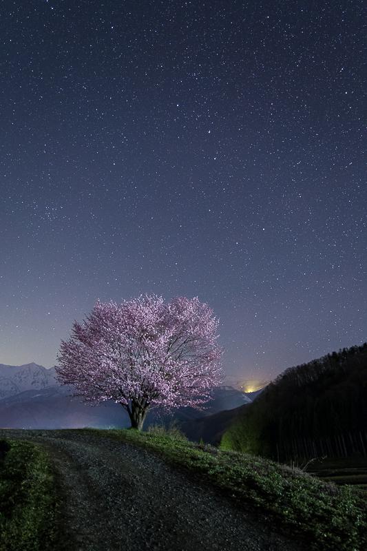 野平の一本桜と北斗七星2B.jpg